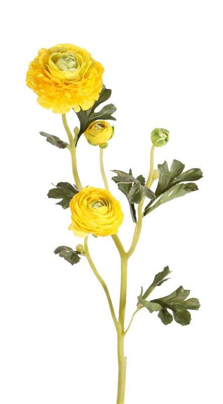 "Ranonkel (Ranunculus) ""Glory"", 3 flores, 4 capullos & 12 hojas, 65 cm"