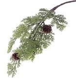 Cypress branch (Cupressus), 10 cluster, 2 cones, 47cm