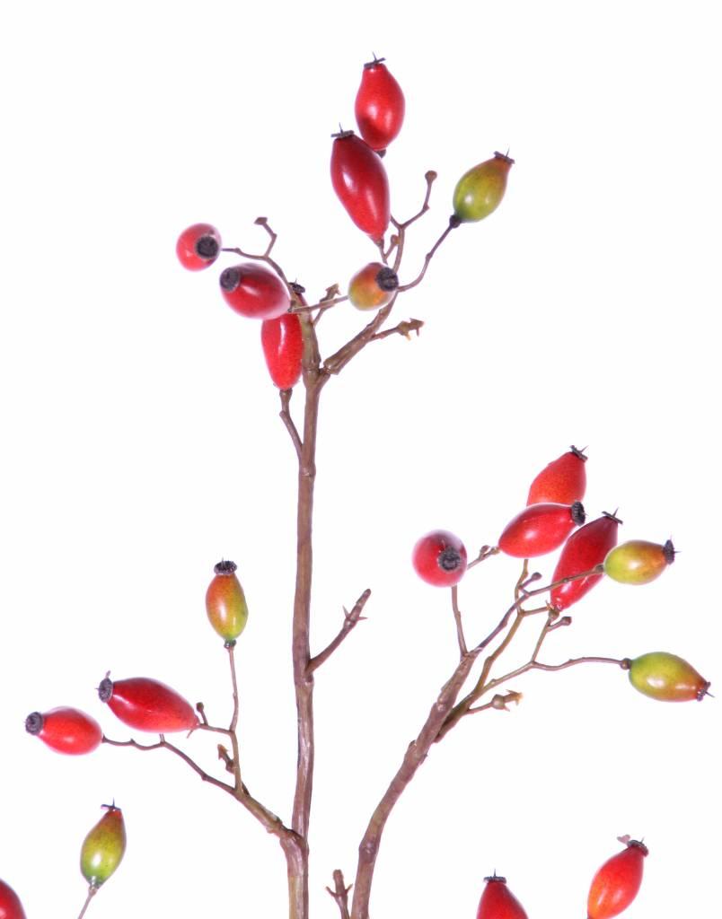 Dog rose (Rosa canina) 41 fruits, 109cm