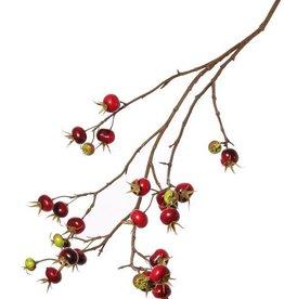 Rozenbotteltak (Rosa rugosa) x27fruits, 110cm