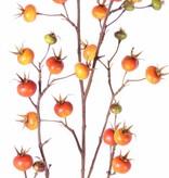Kartoffelrose, Apfel-Rose, (Rosa rugosa) mit 27 Früchten, 110cm