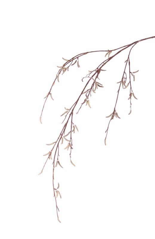 Berkenkatjestak (Betula pendula) x80fruits, no lvs, 91cm