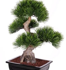 Bonsai Pinus mugo (Bergden), 4 heads, 96 bundles of leaves, in clay tray, 70cm