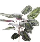 "Calathea ""Medaillion"", 16 bladeren, natural  touch, 76cm"