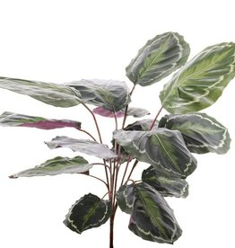 "Calathea ""Medaillion"", 16 bladeren, natural  touch, 76cm"