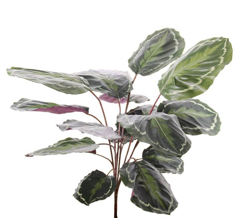 """Calathea """"Medaillion"""", 16 Blätter, natural touch, 76cm"""