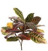Croton plant medium, 24 bladeren, 50cm