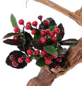 Gaultheria x6, Scheinbeere mit 30 Blättern, 30 Beeren, H15cm