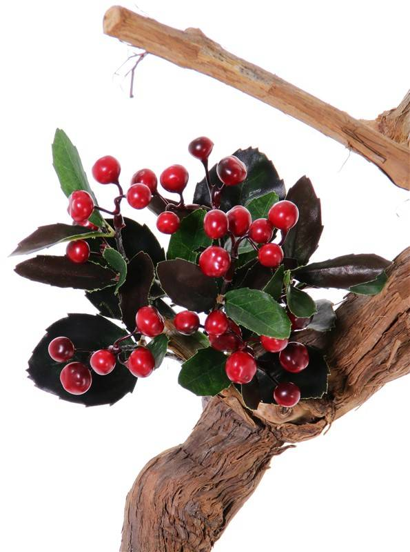 Gaultheria bush x6, 30lvs, 30berries, H15cm