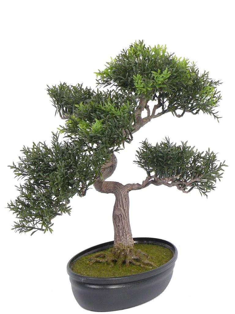 Bonsai tealeaf 217 lvs, 40cm