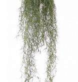 Tillandsiahanger (Spaans mos), 122 lvs, 75cm, (round shape), UVsafe