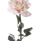 Roos Quiannie x3 Lvs 67cm