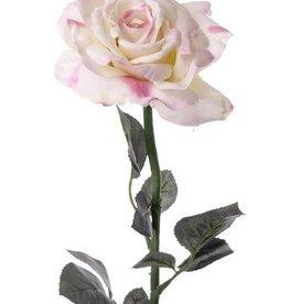 Rose Quiannie, 3 sets lvs, 67cm
