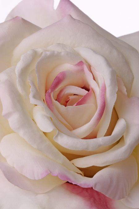 Rose Quiannie 67cm Ø 13cm, mit 11 Blaetter