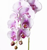 "Phalaenopsis (Vlinderorchidee) ""Noa"" x9flrs (8cm/6cm) & 3buds, 43cm"