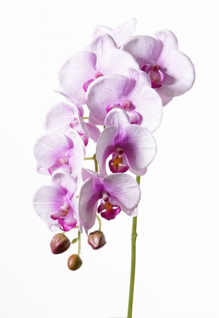 "Phalaenopsis (orchid) ""Noa"", 9 flores, 3 capullos, 43cm"