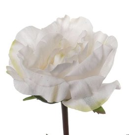 Rosa Colin, 35cm - real touch, Ø 11cm