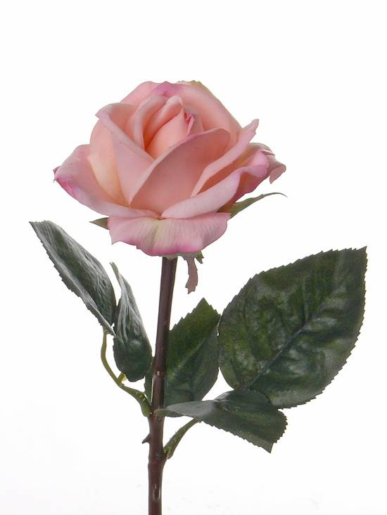 Rosa Caroline, 35cm - real touch