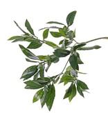 Laurel branch x74lvs, 48cm