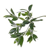 Lorbeerblattzweig mit 74 Blättern, 48 cm
