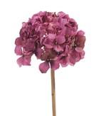 """Hydrangea """"Retro Romance"""", 50cm, Ø 15cm"""
