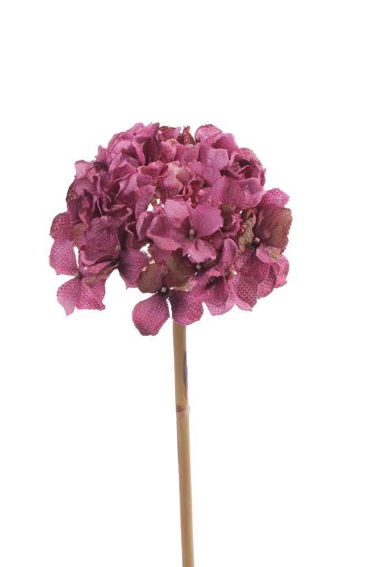 "Hydrangea (Hortensia) ""Retro Romance"", 50cm, Ø 15cm"