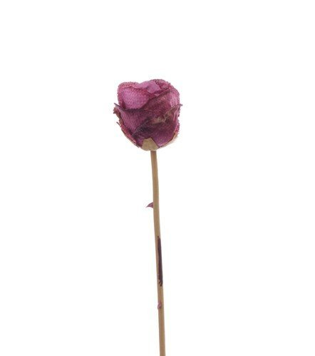 "Rose, ""Retro Romance"", x1, Ø 6cm, 58cm"