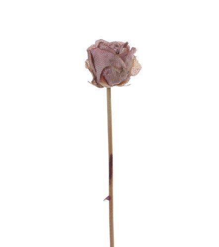 "Rosebud, ""Retro Romance"", x1 no lvs 58cm"
