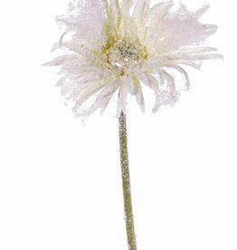 Gerbera spider, snow 65cm - special offer