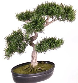 Ceder bonsai 225 lvs 40cm