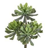 Aeonium bush x4, Ø 14/11/10cm, 33cm - zonder pot