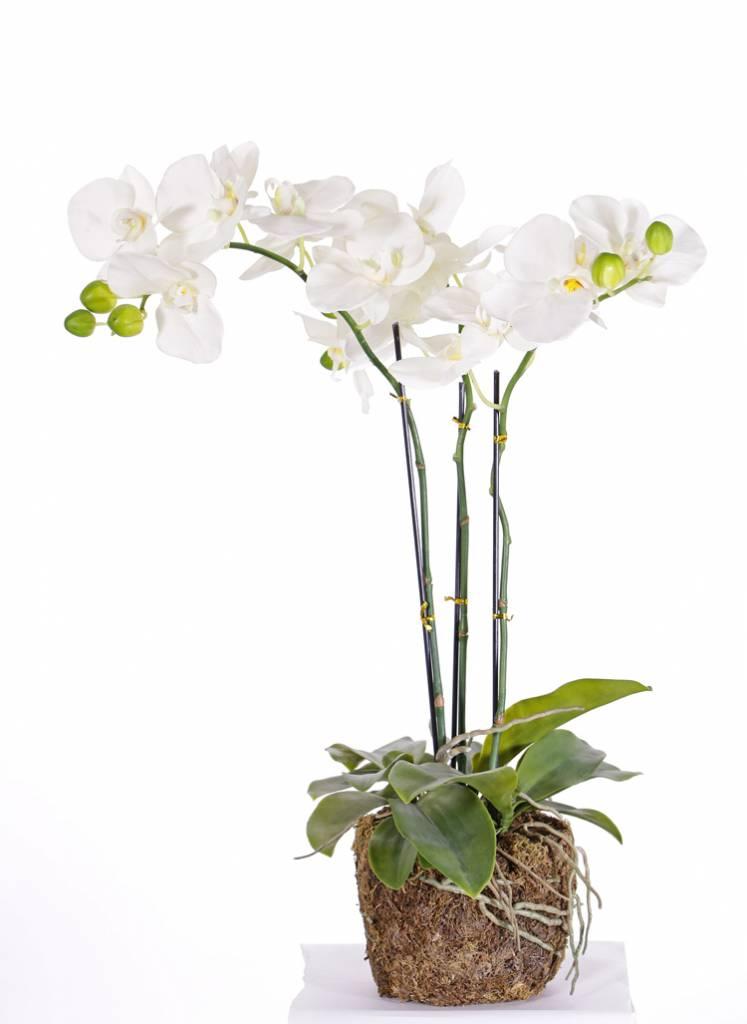 "Phalaenopsis / Orchidee ""natural touch"" x3, 20 Blüten, 7 Knospen, 15 Blätter, Wurzeln und Moos, 65cm"