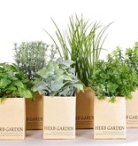 Herbs mix in paper pot, (6.5 x 6.5cm), 6 pieces, sorted
