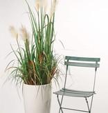 Hierba floreciente x3 81 cm en maceta de plástico