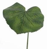 Galax leaf gecoat 36cm, Ø 20cm