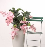Medinilla magnifica , 4 bloemen (2 groot / 2 medium), 24 blad, PU stengels,  Ø 55cm, h. 65cm, in pot