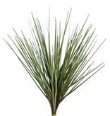 Grastoef, 25cm