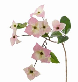 Japanischer Blüten-Hartriegel (Cornus kousa), 9 Blumen & 8 Blätter, 68 cm