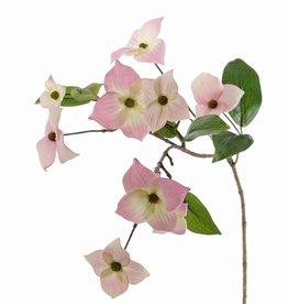 Japanse Kornoelje (Cornus kousa), 9 bloemen & 8 bladeren, 68 cm