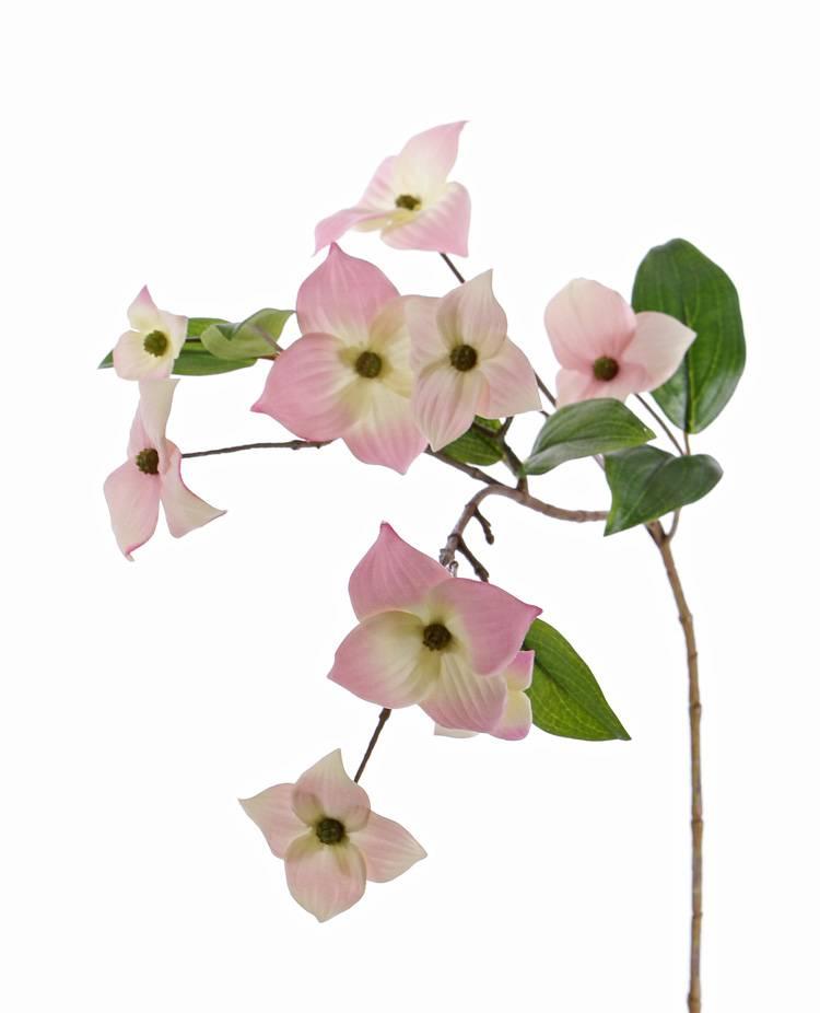 Cornejo (Cornus kousa) con 9 flores & 8 hojas, 68 cm