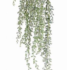 Senecio radicans hanger,  111 Blätter, full plastic, grau grün, 85 cm