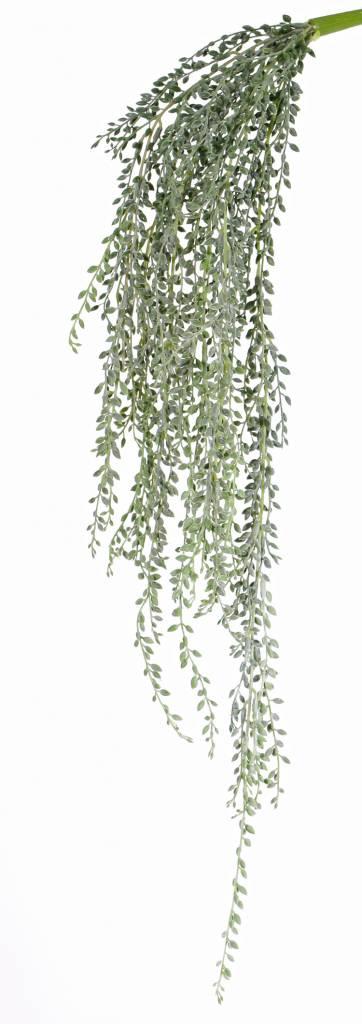 Senecio herreianus (String of Bananas) , 111 hojas, full plastic, grey green, 85cm