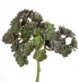 Echeveria mini bush, 37 tips, ø12cm, 19cm