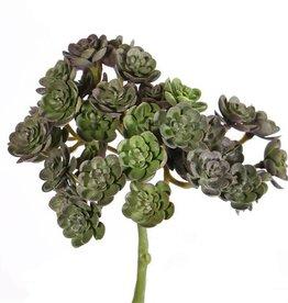 Echeveria mini bush x37, ø12cm, 19cm