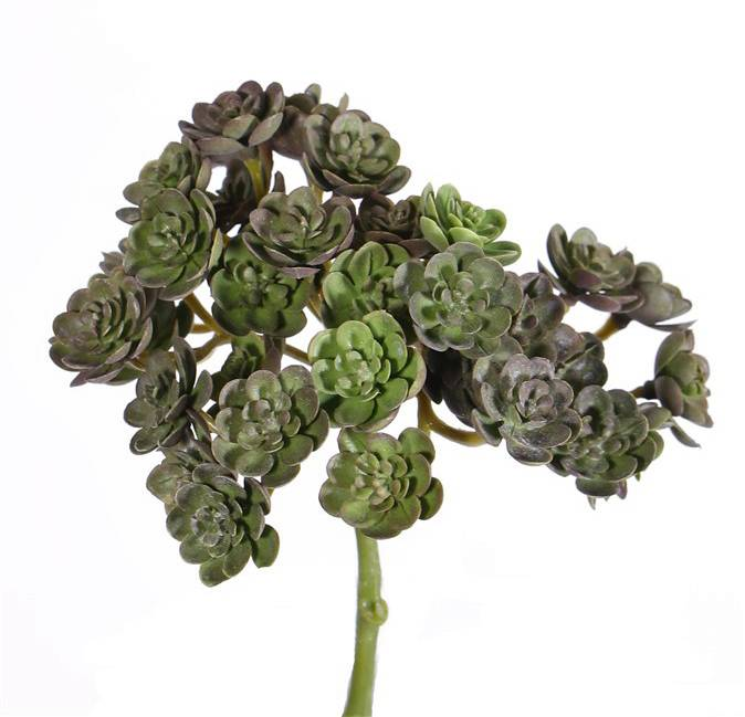 Echeveria mini bush, 37 toefjes, ø12cm, 19cm