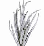 Haworthia bush x18, 33cm