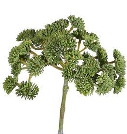 Sedum (Vetkruid) x36, Ø ca. 12cm, 19cm