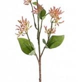 rama de Cornejo,  16 capullos de flor, 6 hojas, 50 cm