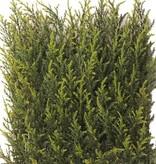 """Cypress haagelement UV bestendig, 25*25cm, 77tips """"1-zijdig gestoken"""", 2tone groen"""