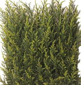 """Cypress haagelement UVsafe, 25*25cm, 77tips """"1-zijdig gestoken"""", 2tone groen"""